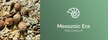 Mezozoic Era